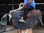 Taureau mécanique avec Tino Lecren