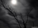 Forêt noyée par pleine lune