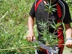 Coupe des bambous