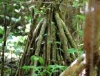 Un bagnan, racines apparentes