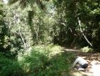 Max s'incline devant la Grande Fougère Arborescente !