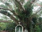 Le Grand Banian, lieu de la première messe catholique