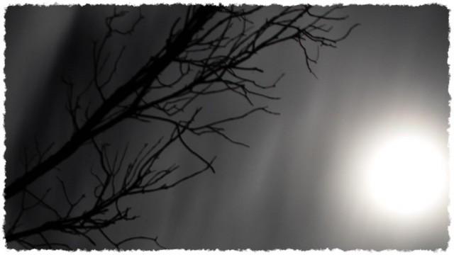 Kayak par pleine lune dans la forêt noyée...