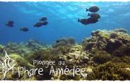 Vidéo - Plongée au Phare Amédée