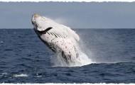 Observation des baleines en cata !