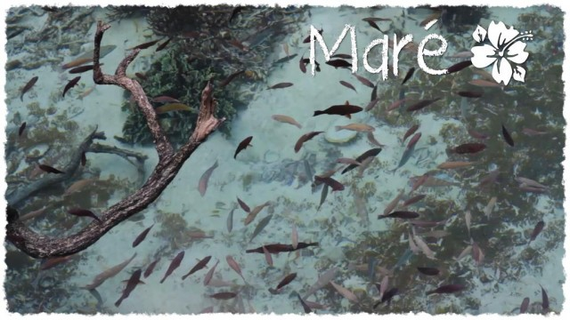 Vidéo - 10 jours à Maré !